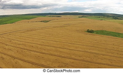 Aerial view of the sown fields