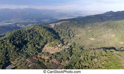 Aerial view of the verdant hills with trees in Napa Valley during summer season.