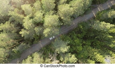 Aerial view of the white car on road in the forest