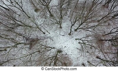 Aerial view of the winter forest with glade