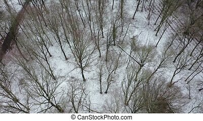 Aerial view of the winter forest with vehicle trace