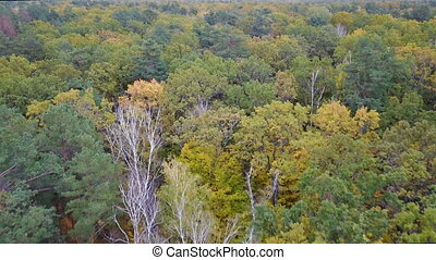 Aerial view of theforest with trees covered with yellow...