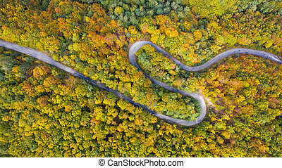Aerial view of thick forest in autumn with road cutting through.