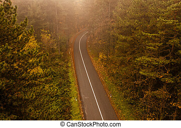 Aerial view of thick forest in autumn with road cutting through