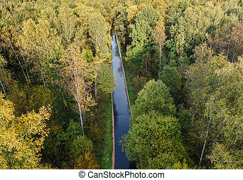 Aerial view of thick forest in autumn