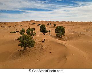 Aerial view of trees in Sahara desert