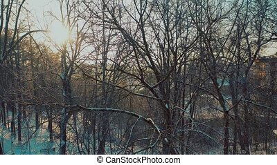 Aerial view of trees in snowy park against shining sun