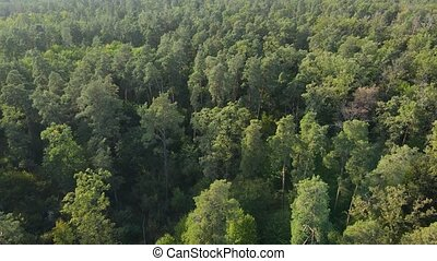 Aerial view of trees in the forest. Ukraine