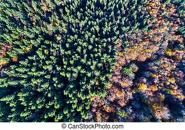 Aerial view of trees in the Vosges Mountains in autumn
