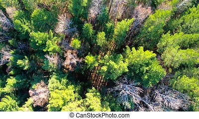 Aerial view of treetops. Camera moves forward over the...