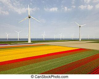 Aerial view of tulip fields and wind turbines in the Noordoostpolder municipality, Flevoland, Netherlands