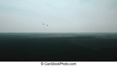 Aerial view of two helicopters flying close. Military...