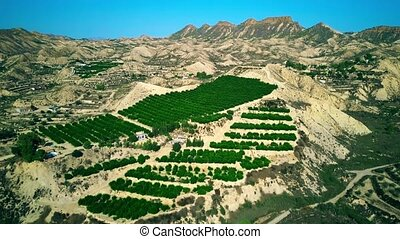 Aerial view of typical orchards scenery in Spain - Aerial...