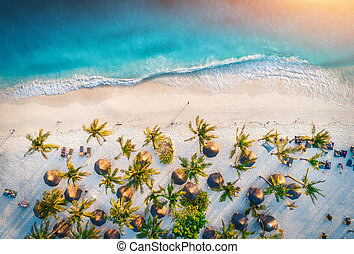 Aerial view of umbrellas, palms on the sandy beach of ocean
