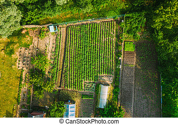 Aerial View Of Vegetable Garden In Small Town Or Village. Potato Plantation And Greenhouse At Summer Evening. Village Garden Beds