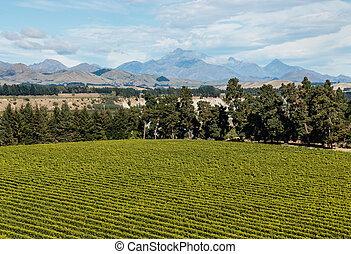 aerial view of vineyard in Marlborough region in New Zealand