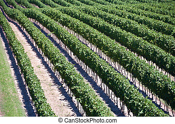 Aerial View Of Vineyard in Ontario Canada