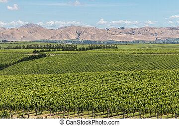 aerial view of vineyards in summertime