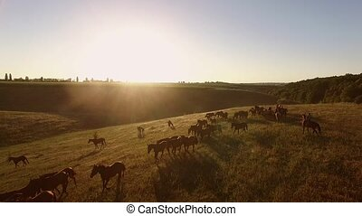 Aerial view of walking horses. Horseman in the distance....
