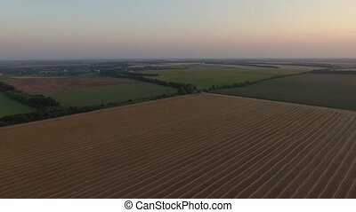 Aerial view of wheat field at sunset