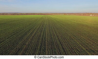 Aerial view of wheat fields with very nice view
