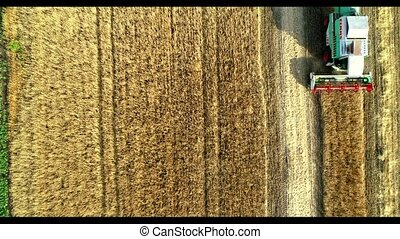 Aerial view of wheat harvest. Drone shot flying over three ...
