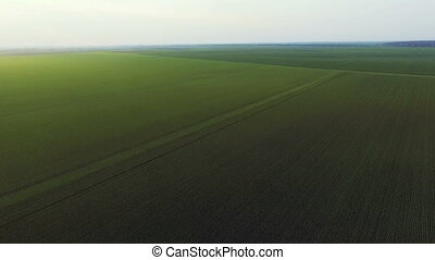 Aerial view of wheat's fields, green landscape