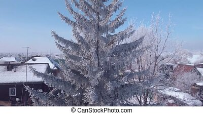 Aerial view of white frost on a frozen tree tops in ...