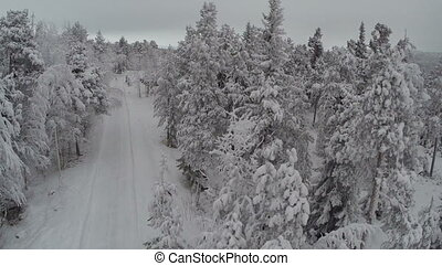 Aerial view of winter camp in pine forest