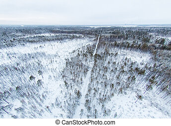 Aerial view of snow-covered forest in Siberia