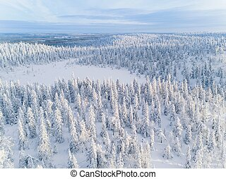 Aerial view of winter forest covered in snow in Finland,...