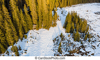 Aerial view of winter forest meadow covered in snow.