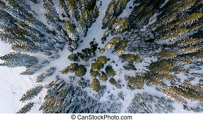 Aerial view of winter forest. Pokljuka, Slovenia