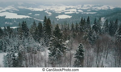 Aerial view of winter mountains, alpine meadow. Hills covered with huge pine trees and snow-capped peaks on the horizon. Beauty of wildlife.