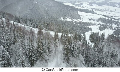 Aerial view of winter mountains covered with pine trees. Low flight over ski resort and snowy spruce forest. Beauty of wildlife on snowy day.