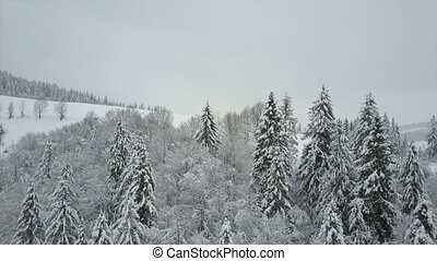 Aerial view of winter mountains covered with pine trees. Low flight over snowy spruce forest. Beauty of wildlife on snowy day.