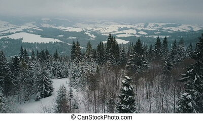 Aerial view of winter mountains covered with pine trees. Mountains on snowy day, beauty of wildlife.