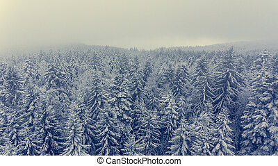 Aerial view of winter pine forest.