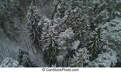 aerial view of winter snowy forest - aerial view of...