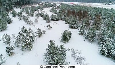 aerial view of winter snowy forest