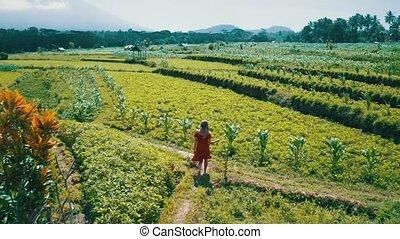 Aerial view of woman in red dress walking along green fields in Bali