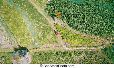 Aerial view of woman in red dress walking along green fields in Bali