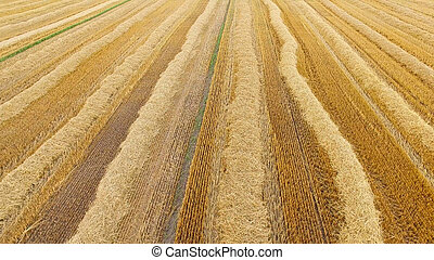 Aerial view of yellow field.