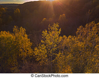 Aerial view of yellow trees in Autumn, Lithuania