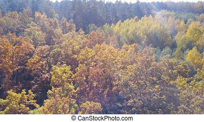 Aerial view on branches in the autumn yellow foliage