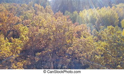 Aerial view on branches in the autumn yellow foliage with roadAerial view on branches in the autumn yellow foliage