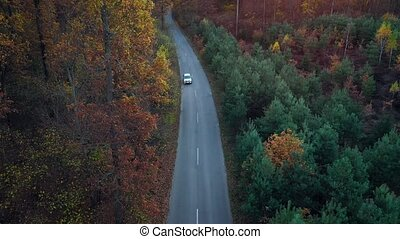 Aerial view on car driving through autumn forest road. Scenic autumn landscape