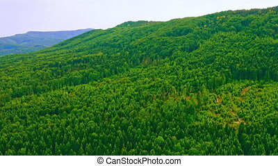 aerial view on greenwood highland - aerial view forest on ...