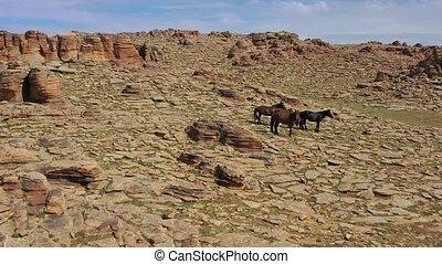 Aerial view on horses and rock formations in Baga Gazriin Chuluu, Gobi desert, Mongolia, 4k