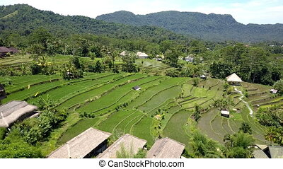 Aerial view on rice terraces, Bali, Indonesia